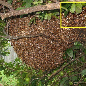 Bee Swarm by: Dennis Riggs
